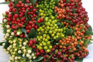 Day 193 - Hypericum Berries