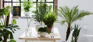 Grønne-planter-oase-1200x550