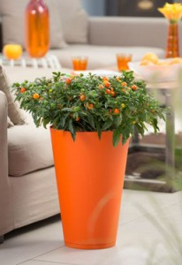 couleurs-du-jardin-orange-pot