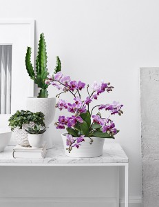 orkide-inomhusvaxter