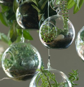 terrariums-featured