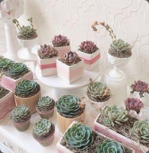 succulents-1010391_10152181320709144[2]