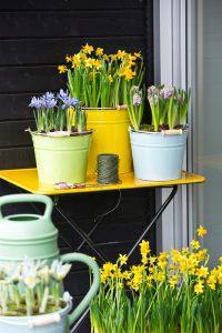 csm_Iris-Hyacinthus-Narcissus-2014_a33b3551b7