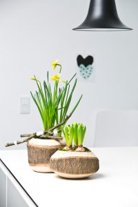 csm_Narcissus-Hyacinthus_6e845be642