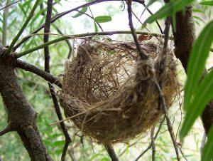 Basket_style_nest